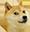 :doge: